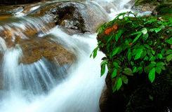 Pong nam dang waterfall Stock Images