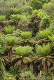 Ponga forest at Ohakune Old coach road walk Stock Image
