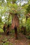 Ponga träd Royaltyfria Foton