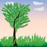 Ponga verde el árbol con las hojas El cielo, los árboles y arbustos Paisaje Fotos de archivo