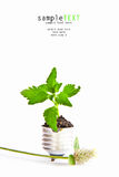 Ponga verde el árbol en bombilla Imágenes de archivo libres de regalías