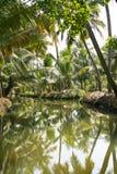 Ponga verde el bosque de la palma por un pequeño canal Fotos de archivo libres de regalías