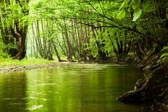 Ponga verde el bosque y el río Imagen de archivo
