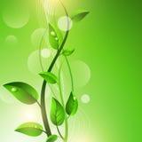 Ponga verde el brote con gotas en las hojas ilustración del vector