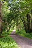 Ponga verde el callejón en el parque Imagen de archivo