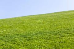 Ponga verde el campo y el cielo azul foto de archivo libre de regalías