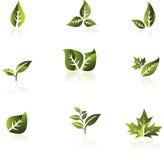 Ponga verde el conjunto del vector de la hoja. Imagenes de archivo