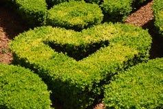 Ponga verde el corazón Imagenes de archivo
