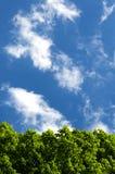 Ponga verde el follaje contra el cielo Imagenes de archivo