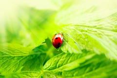 Ponga verde el fondo de la naturaleza Fotografía de archivo