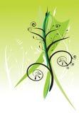 Ponga verde el fondo floral Imagen de archivo