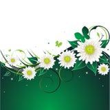 Ponga verde el fondo floral Fotos de archivo