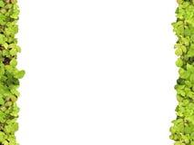 Ponga verde el marco Foto de archivo libre de regalías