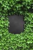 Ponga verde el marco de las hojas de la hiedra Imagen de archivo libre de regalías
