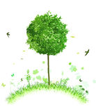 Ponga verde el paisaje Foto de archivo