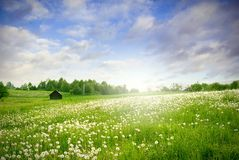 Ponga verde el paisaje del campo fotos de archivo libres de regalías