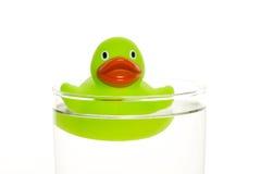 Ponga verde el pato fotografía de archivo