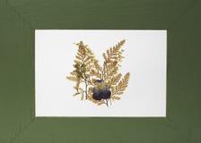 Ponga verde la decoración del marco Imagen de archivo libre de regalías