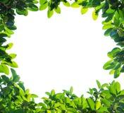 Ponga verde la frontera de la hoja ilustración del vector