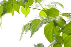 Ponga verde la hoja. Imágenes de archivo libres de regalías