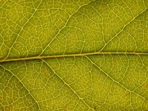 Ponga verde la hoja Foto de archivo