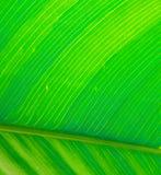 Ponga verde la hoja Fotos de archivo