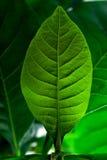 Ponga verde la hoja Imagen de archivo libre de regalías