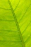 Ponga verde la hoja Fotos de archivo libres de regalías