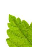 Ponga verde la hoja Imágenes de archivo libres de regalías
