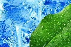Ponga verde la hoja con hielo azul Imagen de archivo
