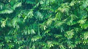 Ponga verde la hoja de palma Imagen de archivo