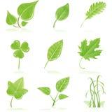 Ponga verde la hoja fresca stock de ilustración