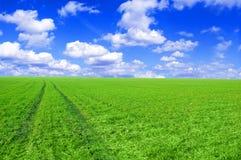 Ponga verde la imagen conceptual del campo y del cielo azul. Imagen de archivo