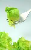 Ponga verde la lechuga Foto de archivo libre de regalías