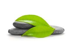 Ponga verde la naturaleza - concepto del ambiente Imagenes de archivo