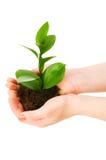 Ponga verde la planta de semillero Imagenes de archivo