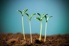 Ponga verde la planta de semillero Foto de archivo