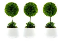 Ponga verde la plantación Fotos de archivo libres de regalías