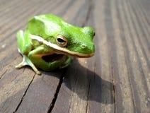Ponga verde la rana de árbol en la cubierta de madera Imágenes de archivo libres de regalías