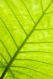 Ponga verde la superficie de la hoja Imágenes de archivo libres de regalías