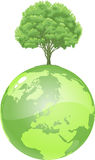 Ponga verde la tierra del árbol Imagen de archivo