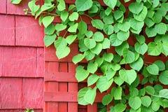 Ponga verde la vid Fotografía de archivo