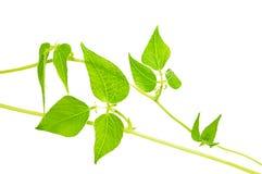 Ponga verde las hojas. Fotos de archivo libres de regalías
