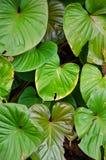 Ponga verde las hojas Fotos de archivo libres de regalías
