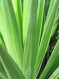 Ponga verde las hojas Imagen de archivo libre de regalías