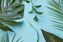 Ponga verde las hojas aisladas Imagenes de archivo