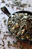 Ponga verde las hojas de té Fotografía de archivo