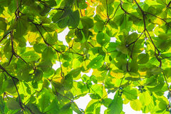 Ponga verde las hojas Foto de archivo