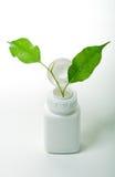 Ponga verde las hojas y la botella Imágenes de archivo libres de regalías
