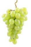 Ponga verde las uvas Foto de archivo libre de regalías
